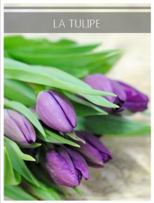 tulipe violet