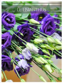 lisianthus violet