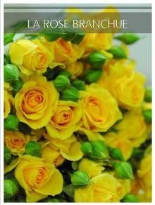 rose branchue jaune