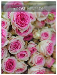 rose mini eden