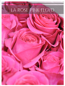 rose pink floyd