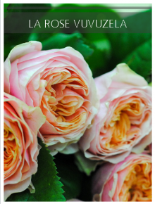 rose vuvuzela
