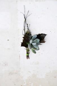 boutonniere succulente erable