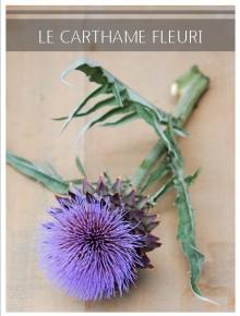 carthame fleuri